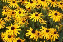 Idéer för trädgården