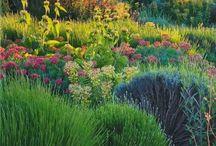 Dry garden planting
