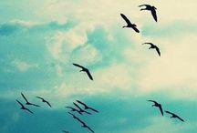 Paradise / kuşlar var, sevin onları.