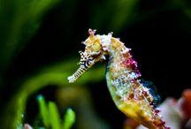 marine magnificence