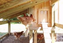 Chicken Coop / by Jan Parkerson