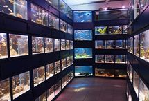 Views around the Tropical Fish room at Wharf Aquatics . / Views of our Tropical Fish section, featuring more than 300 tanks of tropical fish.