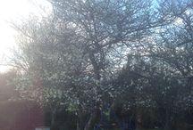 Spring! / Beautiful springtime