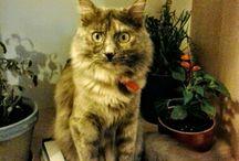 Love for cats: Doris