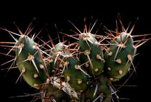 Cacti / by Deborah Redfield