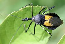 Thailand insects / Interesting insects seen in Southern Thailand on PaddleAsia adventure trips.