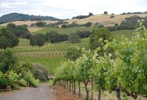 Healdsburg Wineries / While the masses spend their time looking for the road paved with gold, those looking for a more leisurely stroll head to the Wine Road in Northern Sonoma County. http://www.kazzit.com/