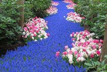Flower Power / Nature )(