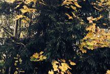 Autumn / Autumn pictures
