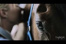 말 사랑 (Horse Love)