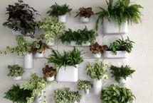 planten ideeen