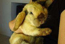 zajačiky :)
