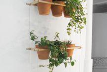suspensions murales plantes