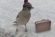 Bird ☺️