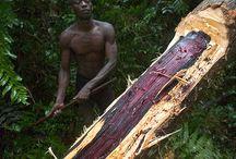 bois Réunion et Madagascar