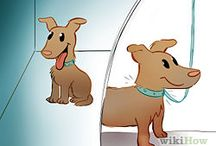 Things to know for Fido  / Useful tips for pet parents.  / by Carla Vaussine Cranfill