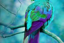 Colourful animals