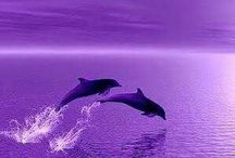 color purple ....live to day...!!