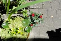 LaLeLu Garden / My garden
