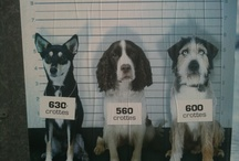 Advertising Dogs