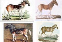 Extincted animals