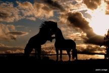 Horses -Nothing Like Them