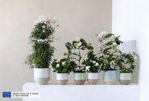 &Plantes à Fleurs Blanches Parfumées