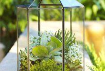 plant decoration & gardening