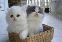 子猫 / 子猫ちゃん