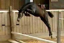 Foals / Foals, Colts and Fillies