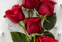 Flores rojas.