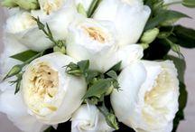 букет невесты / Самые стильные букеты для невест