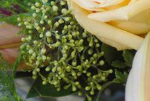 Ruukkukukat / Harvinaisempia kukkivia ruukkukasveja