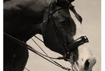 For the Love of Horses / by Linda Ayers