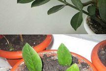 Выращивание растений