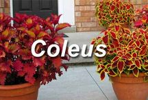 Garden Color / by Plant Care Today