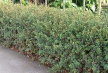 Te Atatu Garden