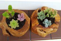 Kaktusy w popielniczkach