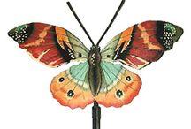 Butterflies / by Paula OMalley