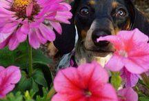 szedek neked virágot.