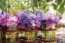 Purple's charm