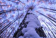 Fák, erdő