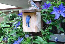 critter houses feeders