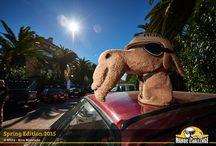 Maroc Challenge - Spring Edition 2015 / Participantes