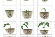 Что как растёт