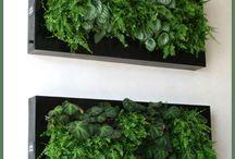 quadro verde jardim vertical