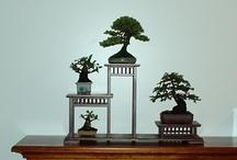 Bonsai / Photos of mine and other bonsai.