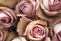 Antique Rose Decor