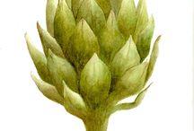 Botanical Art / Original botanical illustrations
