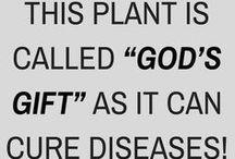 Plants fir cure deseas